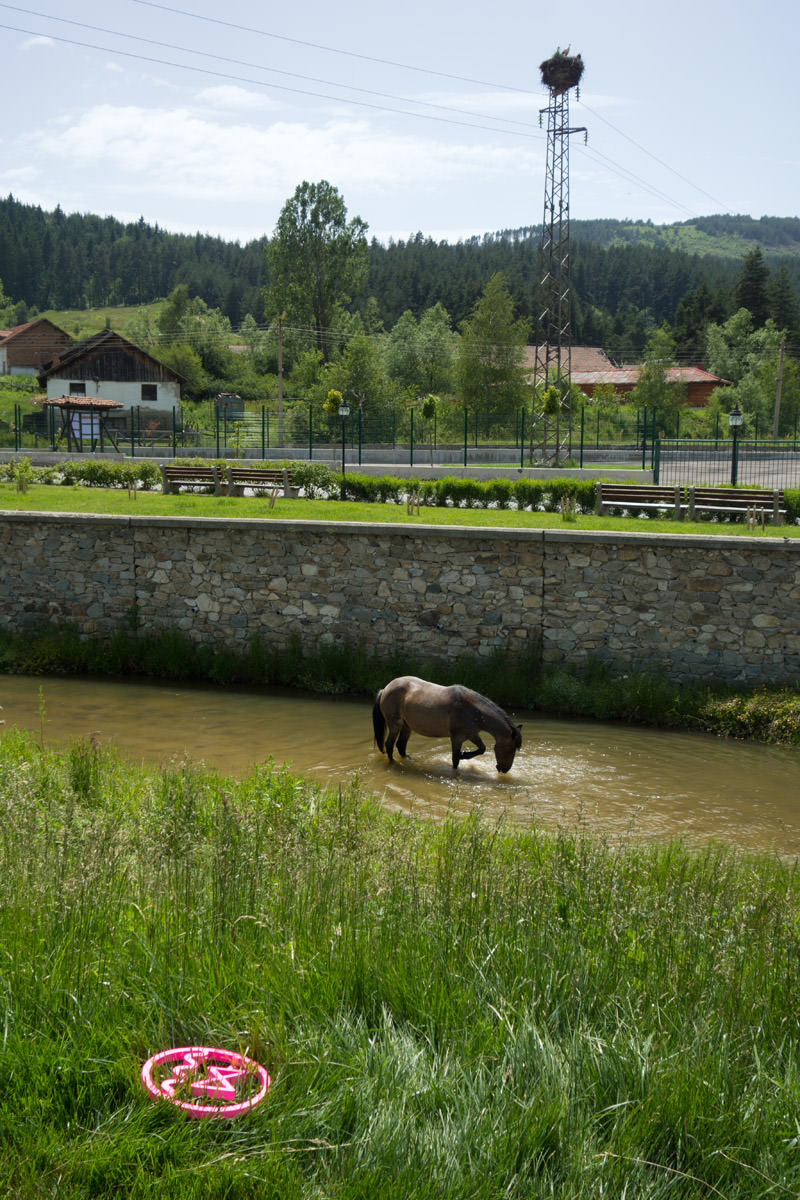 A horse was bathing in the river. Behind that, on top of the steel tower, there was a Stork family.@Koprivshtitsa