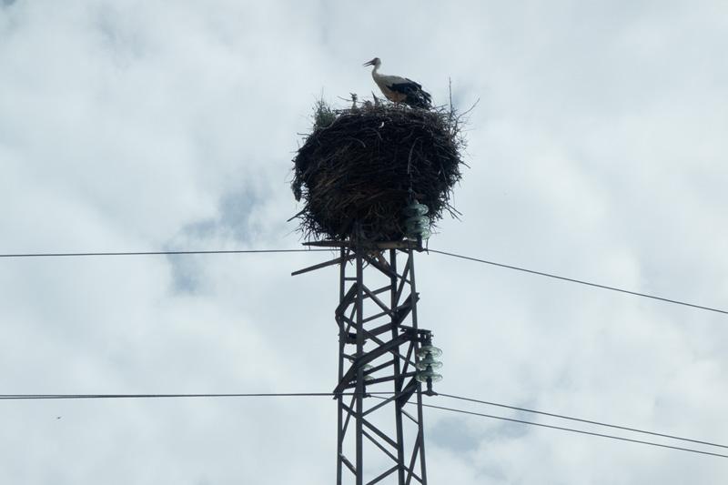 Stork family@Koprivshtitsa